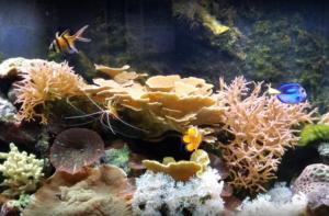 St. Lucie Aquarium
